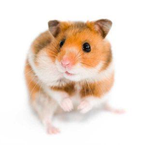 Hamsterille pesälaatikko