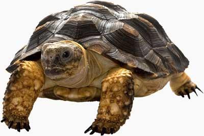 Kilpikonna