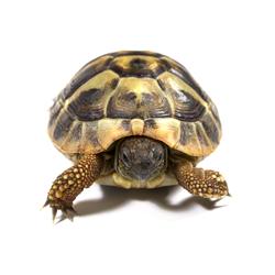 Pesälaatikko kilpikonnalle