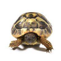 Kilpikonnan Kotipesät.